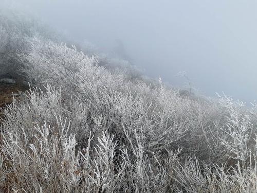 지리산국립공원에 서리·얼음…올해 첫 상고대
