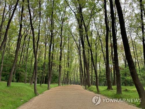 오늘부터 조선왕릉 속 치유의 숲길 더 길게 걷는다