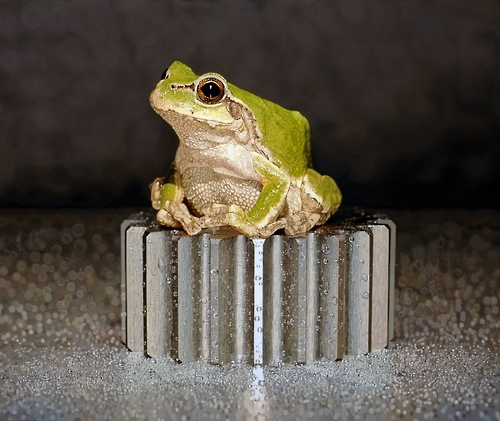 "This undated image provided by artist Kim Young-sung shows one of his paintings from his ""Nothing. Life. Object"" series, featuring a frog. (Yonhap)"