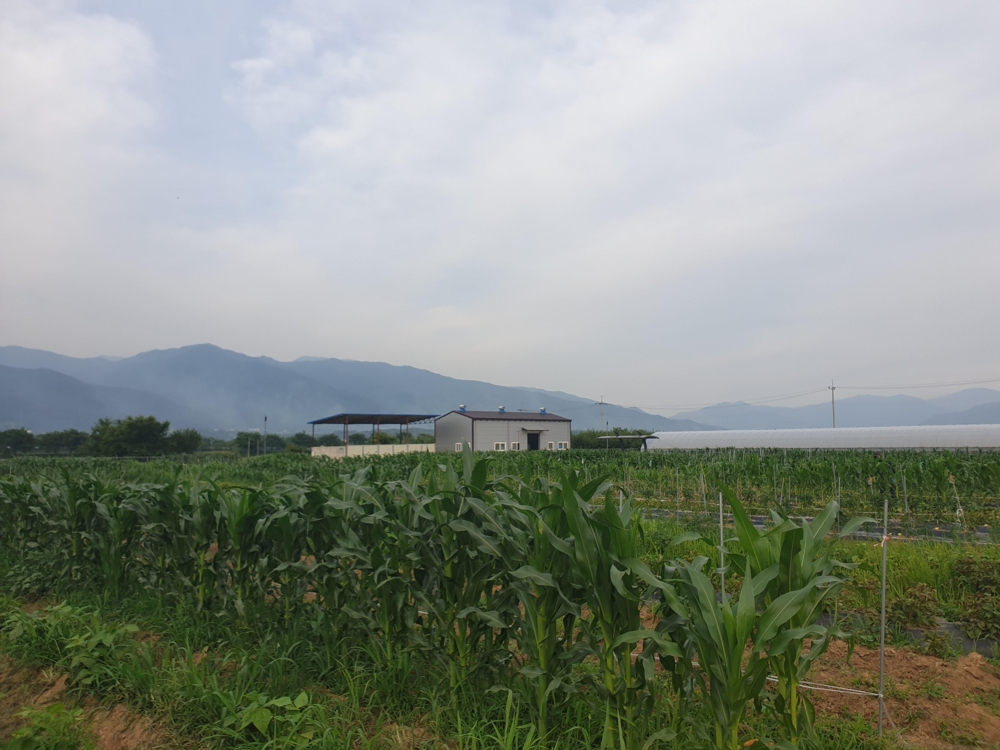 Shown in the photo taken June 13, 2019, is the farm located at the agricultural support center operated by the Ministry of Agriculture, Food and Rural Affairs for rural settlers, located in Gurye, 422 kilometers south of Seoul. (Yonhap)
