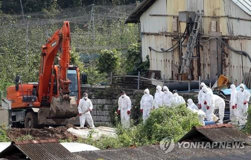 2 dead pigs found inside DMZ test negative for African swine fever