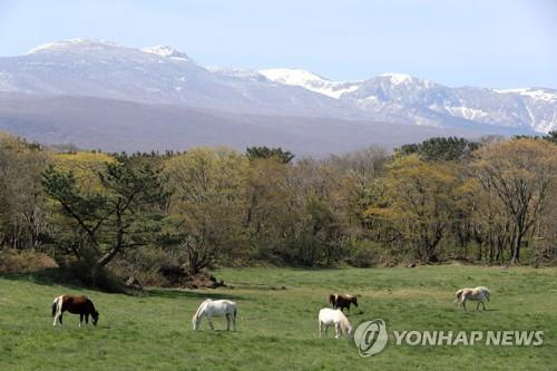 This file photo taken April 14, 2020, shows Mount Halla on Jeju Island. (Yonhap)