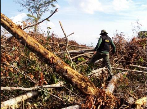 브라질 환경 당국 요원들이 아마존 열대우림의 불법 벌목 현장을 조사하고 있다. [브라질 뉴스포털 G1]