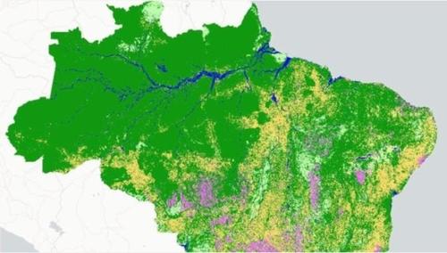 브라질의 삼림은 아마존 열대우림과 세하두(Cerrado), 판타나우(Pantanal), 카칭가(Caatinga), 팜파(Pampa), 마타 아틀란치카(Mata Atlantica) 등 6개 지역으로 나뉜다. [브라질 뉴스포털 G1]