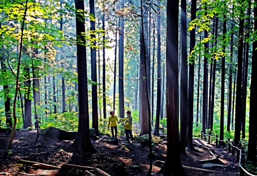 국립 장성숲체원 치유의 숲