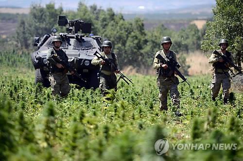 지난 2013년 마리화나 농장을 급습한 터키 군경