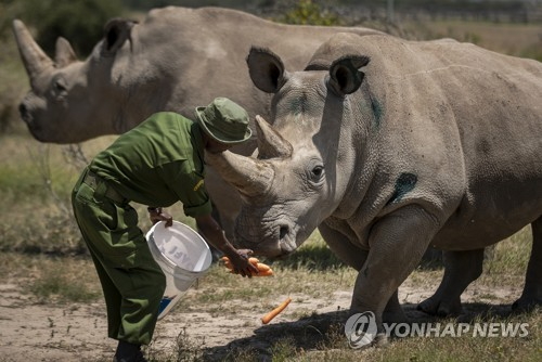 멸종위기 종인 북부 흰코뿔소