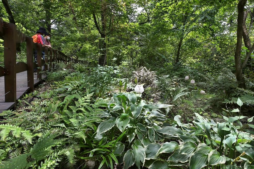 복주머니란속 전시원. 전 세계적으로 희귀식물인 복주머지란속 식물을 야생화와 함께 관찰할 수 있는 공간이다. [사진/전수영 기자]