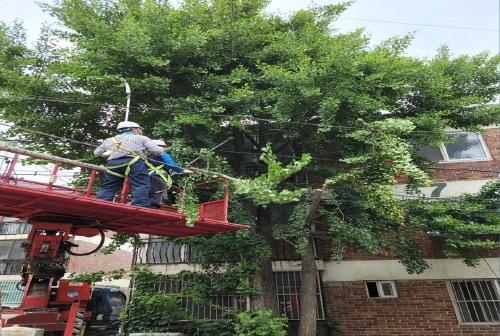 인천 계양구, 생활 주변 위험수목 처리지원 사업 종료 - 1