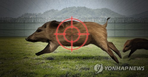 S. Korea confirms 33rd wild boar infected with African swine fever