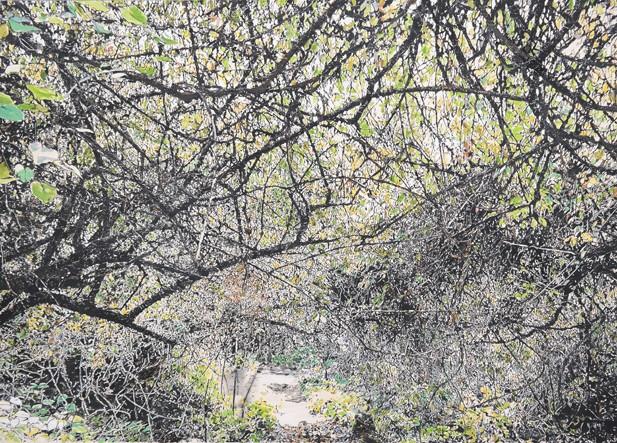 곶자왈-치유의 숲