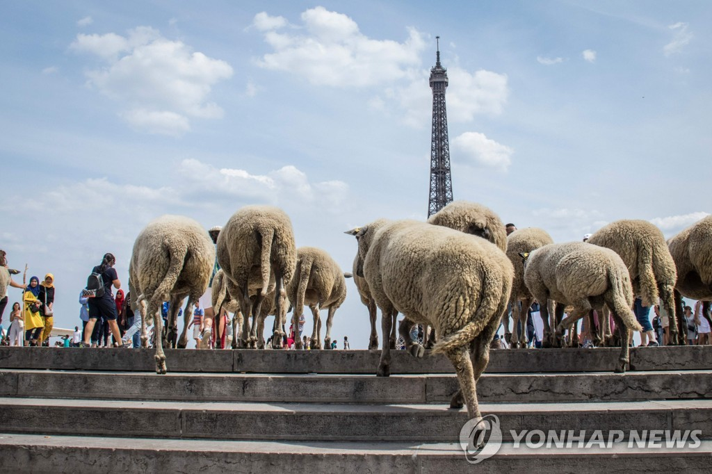 FRANCE-FARMING-AGRICULTURE-CITY-SHEEP