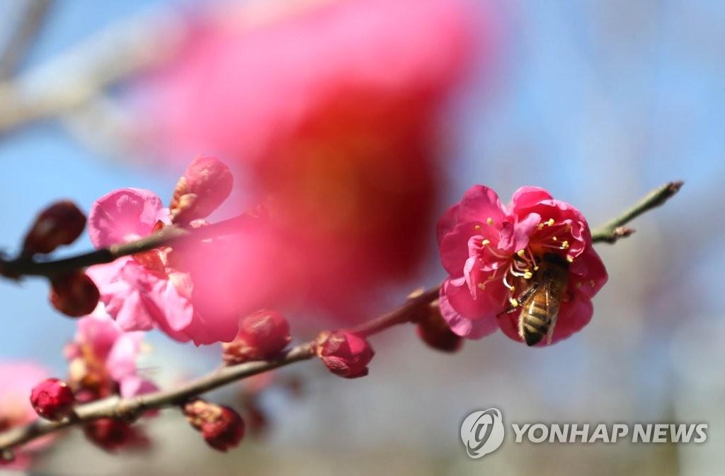 """""""봄 나들이 나왔어요"""""""